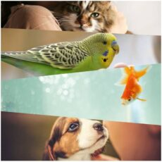 reasons why you should have a pet